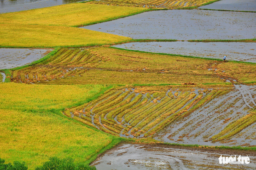 Bình dị mà rạng rỡ trên cánh đồng lúa Tà Pạ ở Tri Tôn - Ảnh 4.