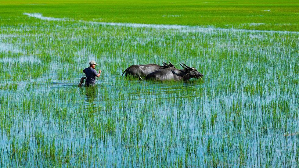 Hà Tiên, thành phố của những cánh đồng xanh - Ảnh 11.