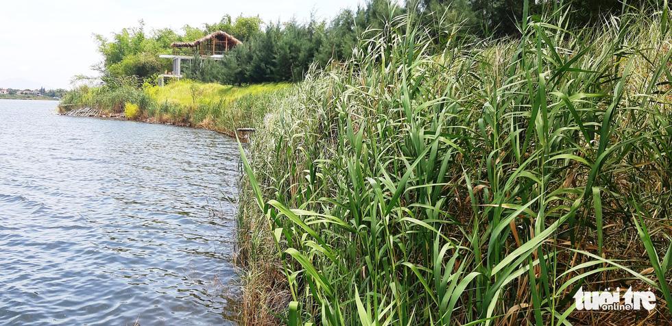 Làng tre Triêm Tây mát rượi bên sông, cách Hội An chỉ 2km - Ảnh 8.