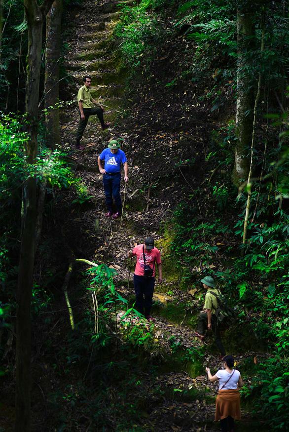 Ngắm thần mộc sa mu ngàn năm tuổi trong rừng nguyên sinh - Ảnh 6.