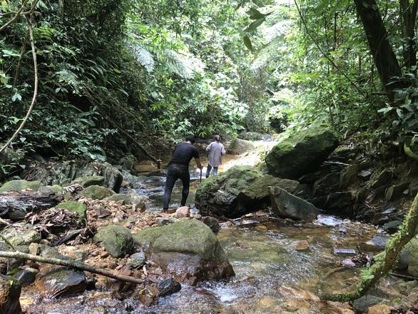 Ngắm thần mộc sa mu ngàn năm tuổi trong rừng nguyên sinh - Ảnh 7.